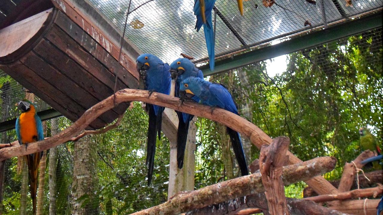 Parque das Aves (13)
