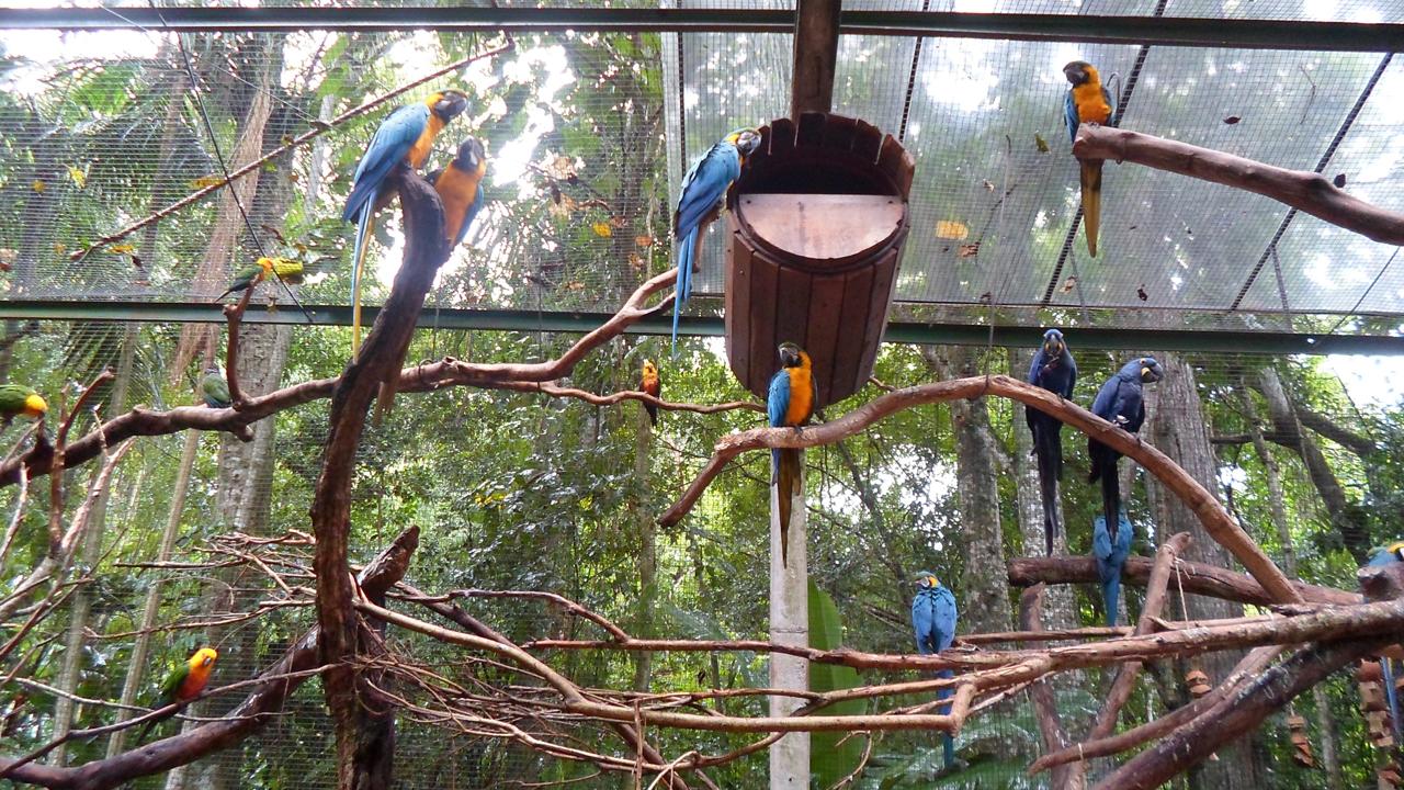 Parque das Aves (14)