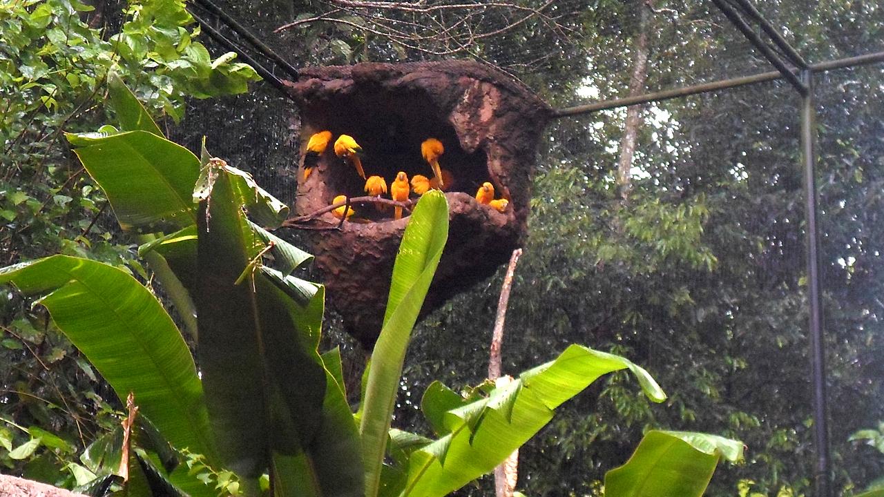 Parque das Aves (16)