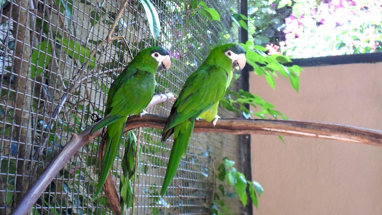 Parque das Aves (2)